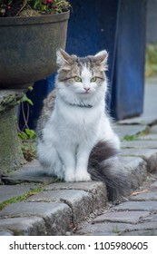Cat sitting on road Norway Stavanger