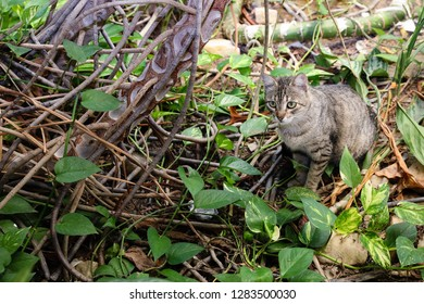 Cat sitting on roots and leaves of plants.