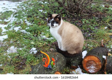 The cat is sitting on the small log looking at glass cock in the garden.