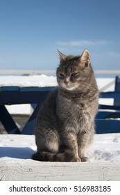Cat is sitting on the snow against the sky and the sea