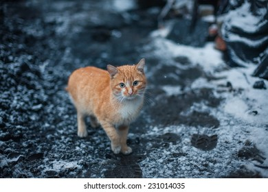 Cat sitting on snow and looks. winter photo.