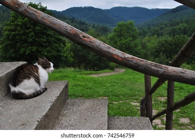 Cat sitting on the stairs in the mountains. Wooden handrail. Mountain view. Beautiful relaxing landscape.