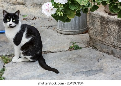 A cat sitting on a street of Plaka, Athens, the old traditional part of the city, next to a pot of flowers, on some door steps.
