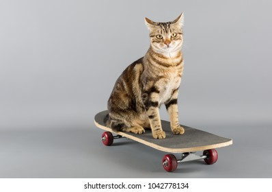 Cat sitting on top of a skateboard