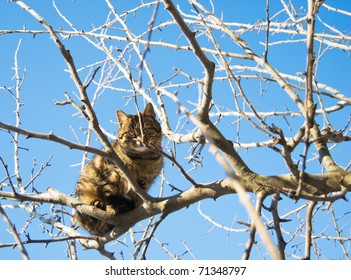 cat sitting on the tree