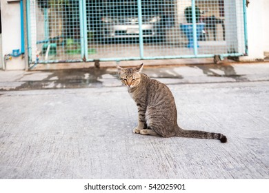 A cat is sitting on the village's street