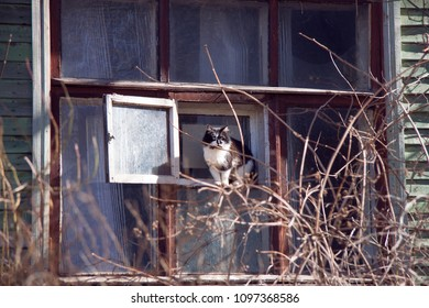 the cat sitting on window