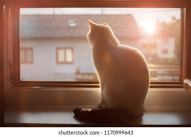 cat sitting on a window sill and looking outside