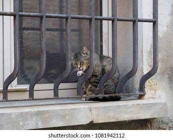 Cat sitting on the windowsill.