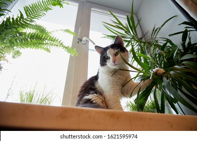 Cat is sitting on the windowsill and eating homemade flowers. Harmful pet. Grass with vitamins for a kitten. Healthy eating concept of domestic animals