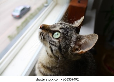 Cat sitting on the windowsill and looking out