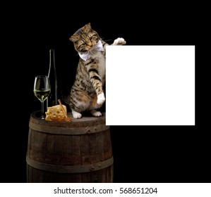 cat sitting on wine barrel with white wine bottle glass and cheese