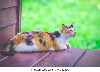 Cat sitting on a wooden balcony.