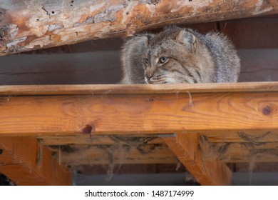 Cat Sitting on a Wooden Ledge