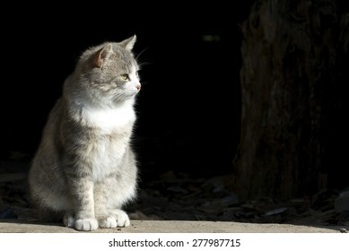 a cat sitting outdoor