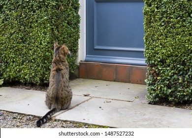 Cat sitting outside front door of a home in England, UK