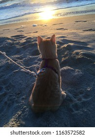 Cat sitting in the sand looking at the beach