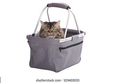Cat sitting in shopping basket isolated on white