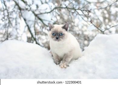 Cat sitting in snow
