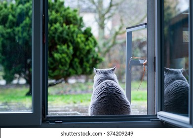 A cat is sitting and watching the rain.