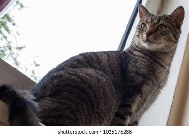 A cat sitting at the window