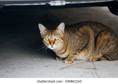 A cat sitting/lying under the car
