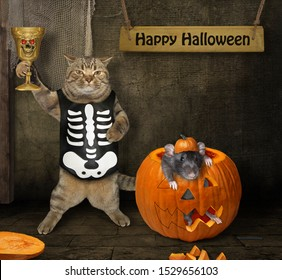 The cat in a skeleton costume drinks a magic potion from the golden goblet in the in barn. The rat inside a pumpkin is next to him. Happy Halloween.