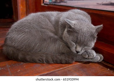 Cat sleep in the cat cafe