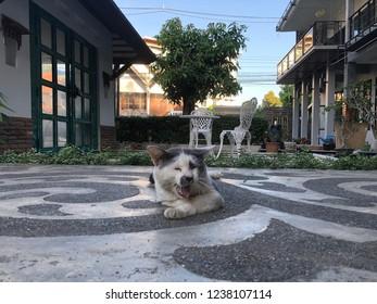 Cat sleep floor - Shutterstock ID 1238107114