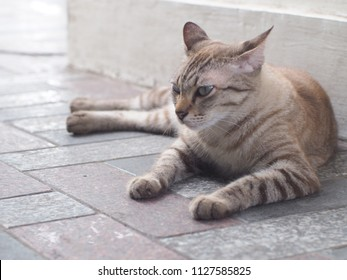 Cat sleep on the floor
