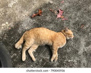 The cat is Sleep on floor