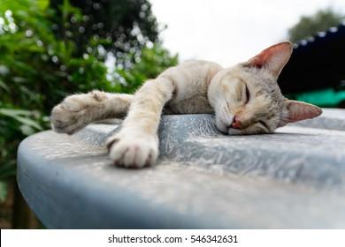 cat sleep on outdoor