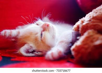 The cat sleep on red safa