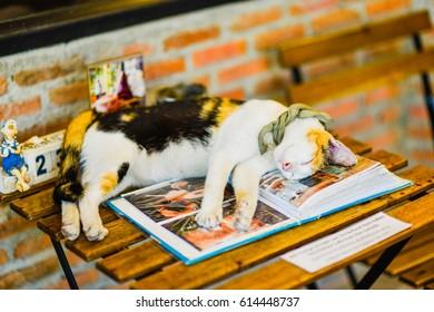 Cat sleep on the table.