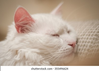The cat is sleeping.