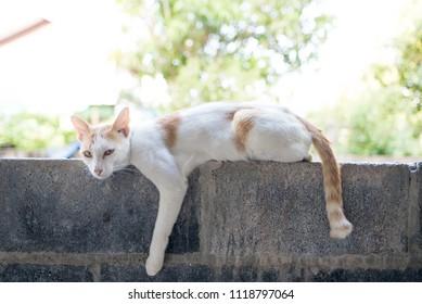 cat Sleeping cat animal