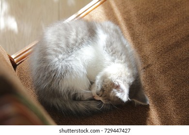 The cat is sleeping in a chair at home