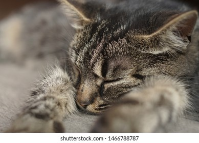 the cat is sleeping close up