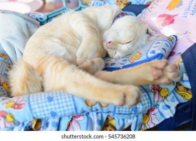 cat sleeping and closeup face