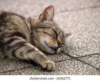 Cat sleeping face
