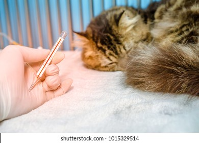 A cat sleeping with fever, was checked temperature with thermometer in small animal hospital or veterinary clinic. The cat was treated by intravenous fluids and NSAID drugs.