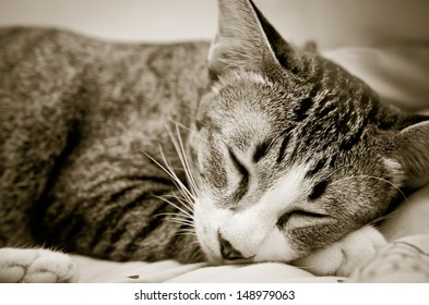 Cat sleeping happily on the bed