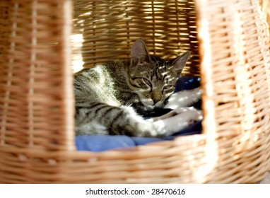 Cat sleeping in his house
