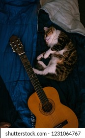 The cat is sleeping next to the guitar.