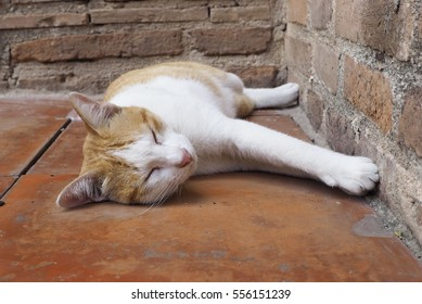 Cat sleeping in an old temple, Ayutthaya historic park, Thailand.