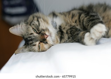 cat sleeping on a bed