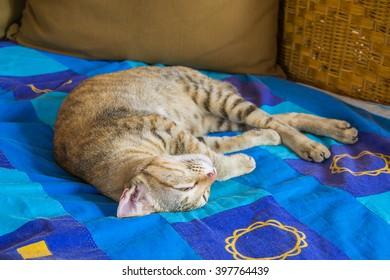 Cat sleeping on blue fabric