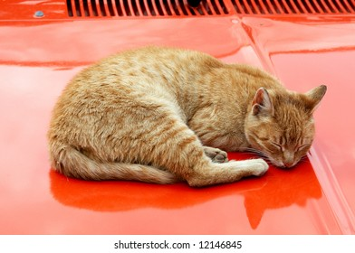 A cat sleeping on the car