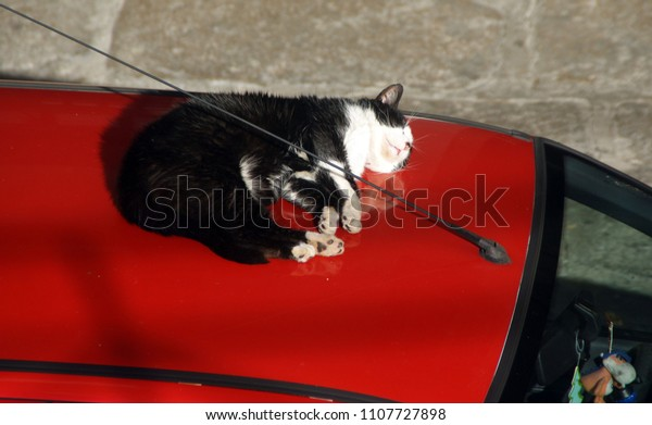Cat sleeping on the car roof...