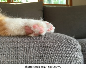 Cat sleeping on a couch. Close up of the feet with little pink pads. Furry cute cat toes. Grey couch. Close up of cat feet.